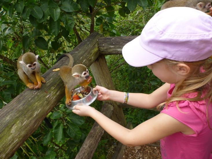 Product Monkey Land Safari