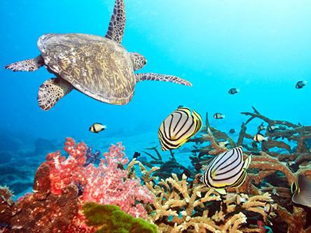 Product Kauai: Deluxe Na Pali Coast Snorkel Cruise