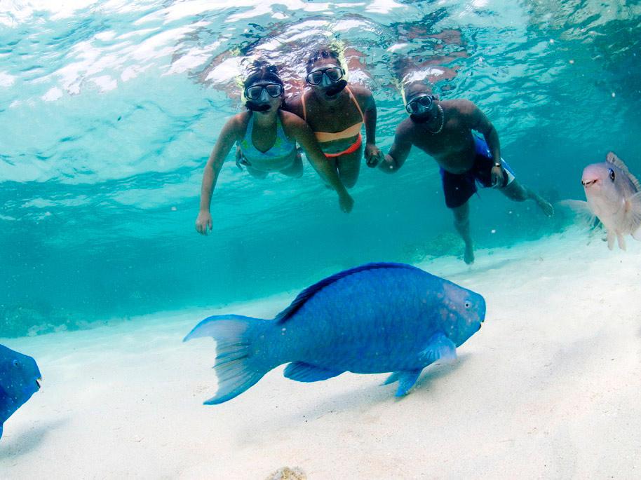 Product Palm Pleasure Snorkel Adventure