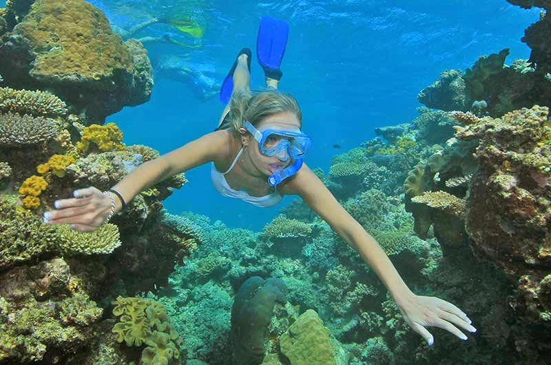 Product Great Barrier Reef - Snorkeler