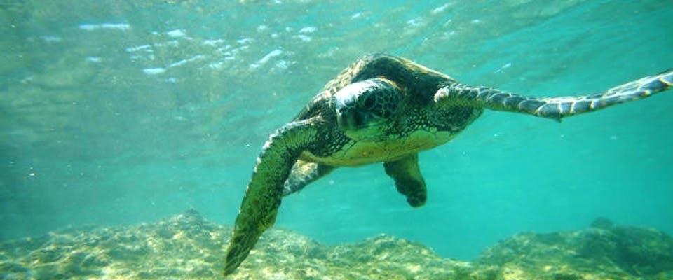 Shore Excursion-Molokini Turtle Snorkel Adventure