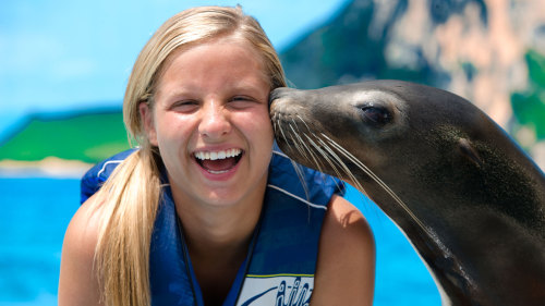 Sea Lion Encounter  image 1