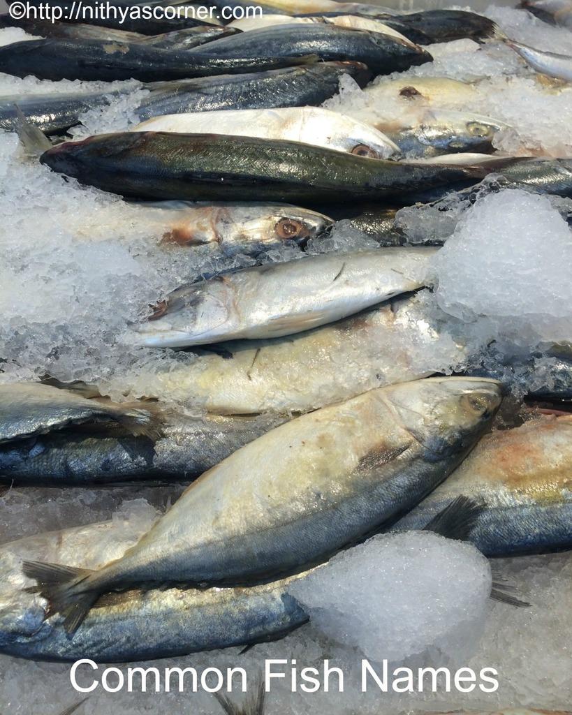 Fish Names In Indian Languages Like Hindi Marati Tamil