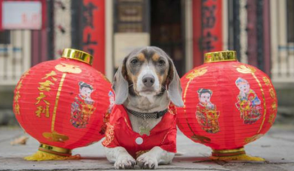 Year Of The Dog Celebration