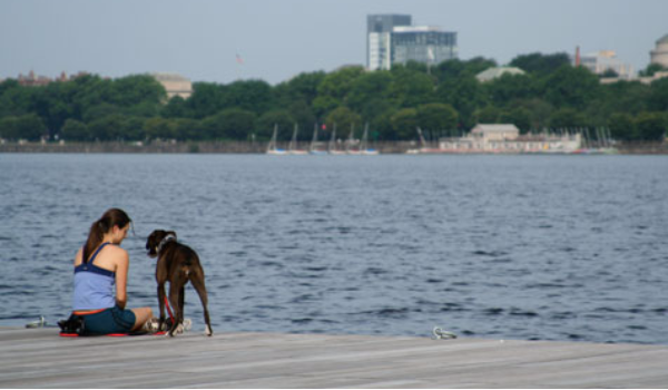 Top 10 Cities For Dog Lovers - Boston