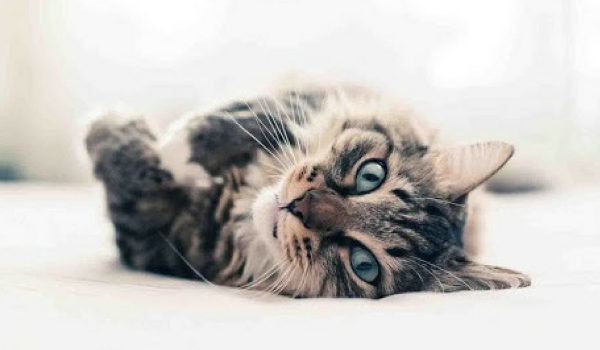 12 Pawesome Cat Facts