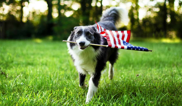 All American Pet Photos