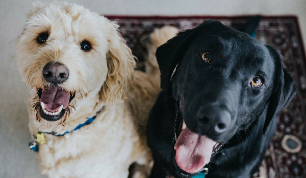 No-kill by 2025: Best Friends Conference