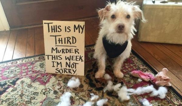 Top 16 Guilty Dogs