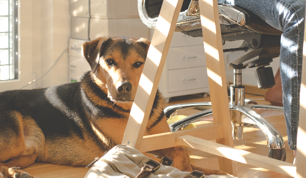 Bringing Your Dog To Work: The Do's and Dont's