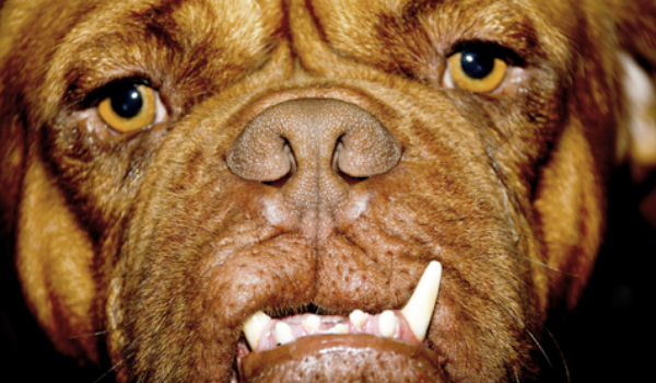 14 surprising things you may doing wrong with your dog 6