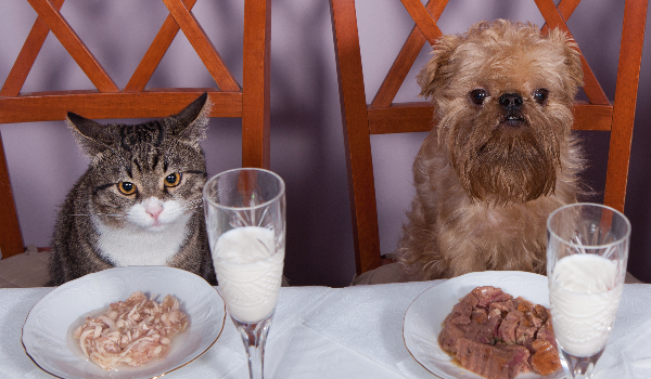 5 Tips For a Healthy Holiday with Your Cat and Dog