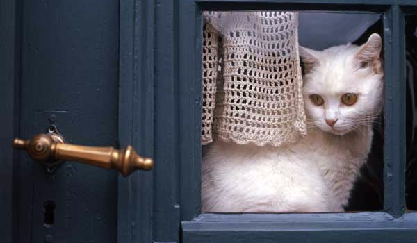 Home Alone For the Holidays- Tips and Hazards of Leaving Your Cat