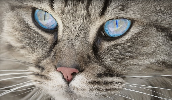 Ring in the New Year with Tips From a Cat Expert