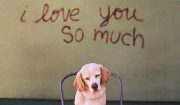 10 Reasons You May Be in the Doghouse This Valentine's Day