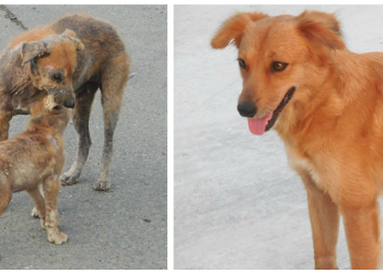 Puerto Rican Street Dog Recovery
