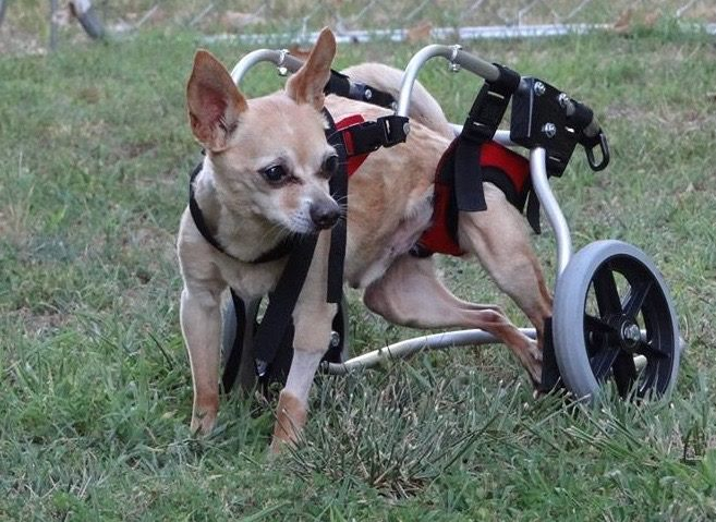 Buddy's Journey to Mobility 1