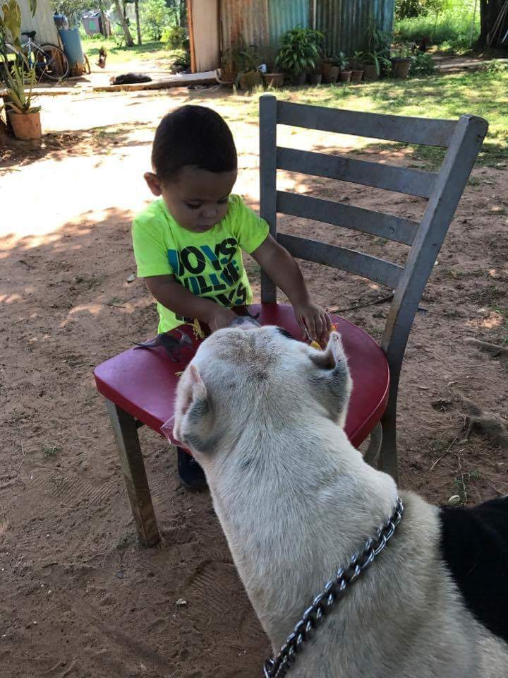 From Bait Dog to Babysitter