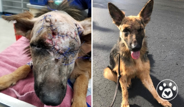 From chemical burns to companionship: Duke's journey