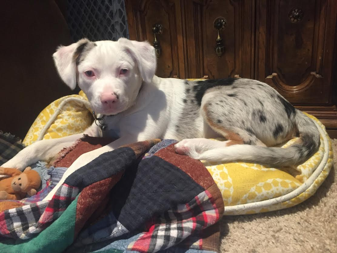 Blind Puppy Finds Perfect Home