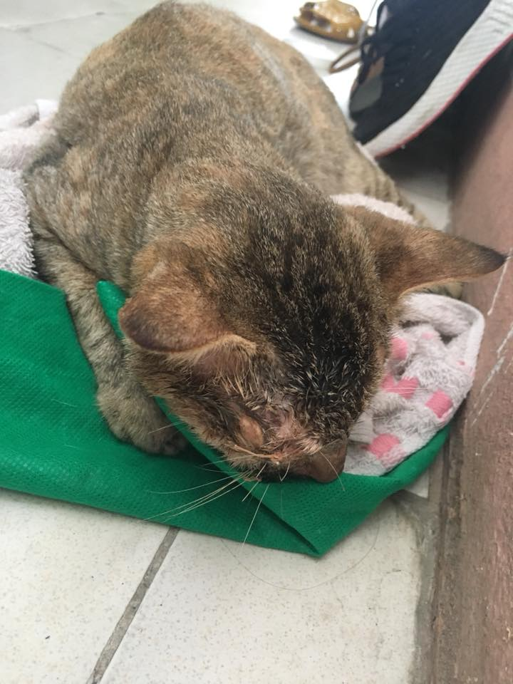 Rescued kitty's miraculous recovery