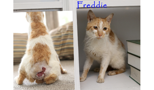https://poundwishes.com/success-story/241/freddie-must-have-suffered-but-he-needs-help-now