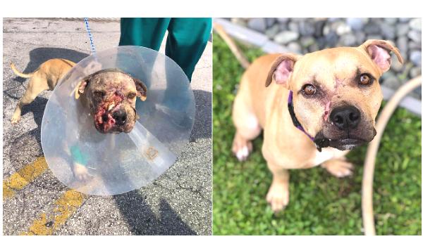 https://cuddly.com/success-story/301/bait-dog-no-more