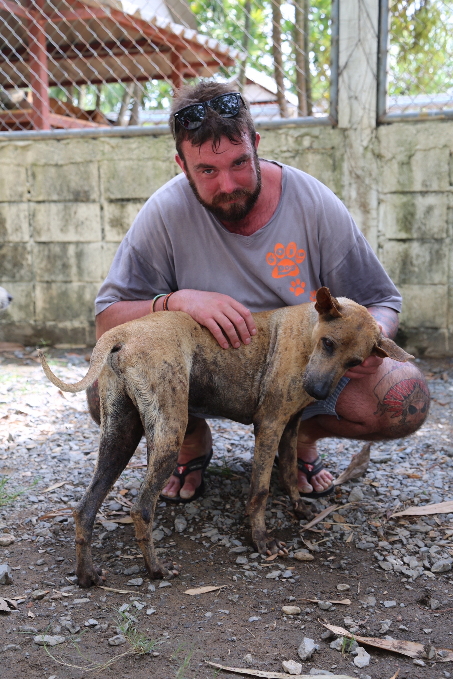 Rescue from Dog Meat Trade