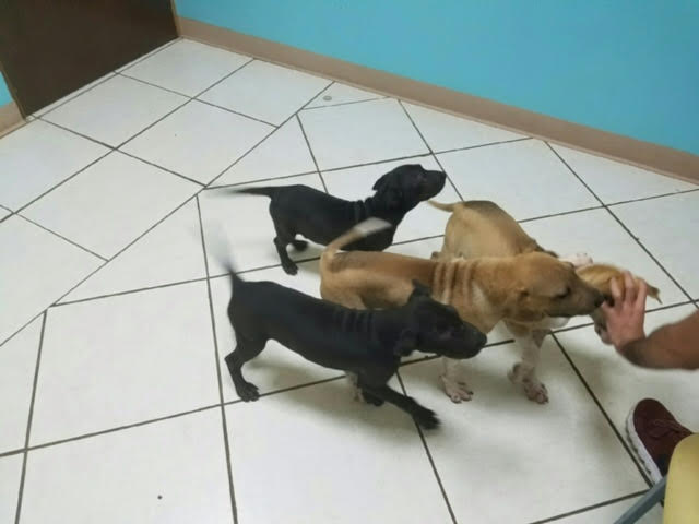 4 Puppies: Coco, Toffee, Rosebud, Smokey 6