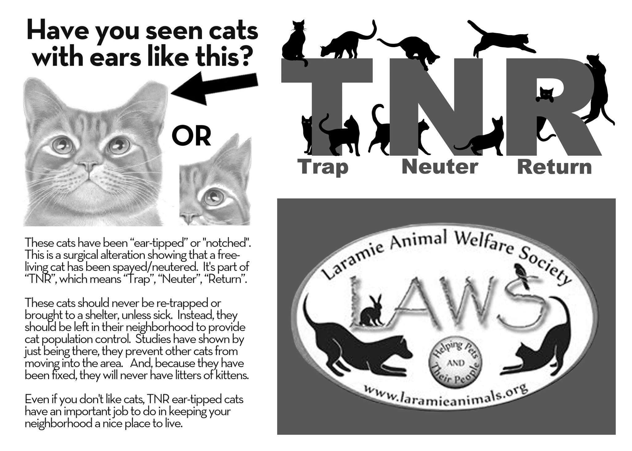 feral cat spay neuter project