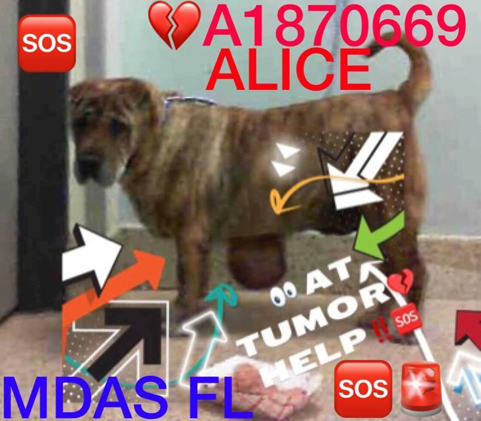ALICE EMERGENCY HAS GIGANTIC TUMOR!