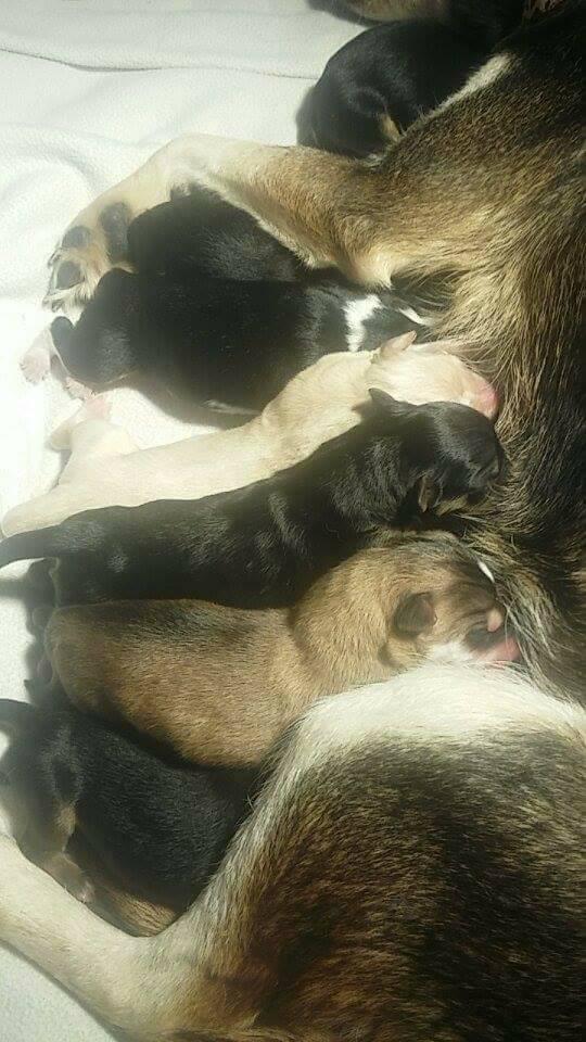 Baby Husky's need vetting!