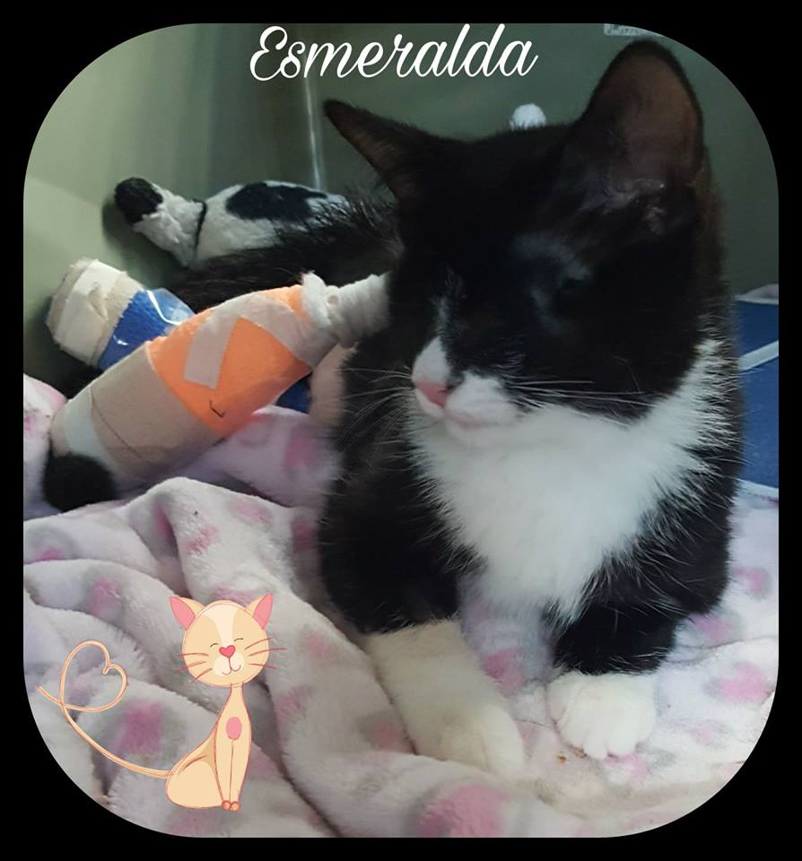 Esmeralda Needs Your Help