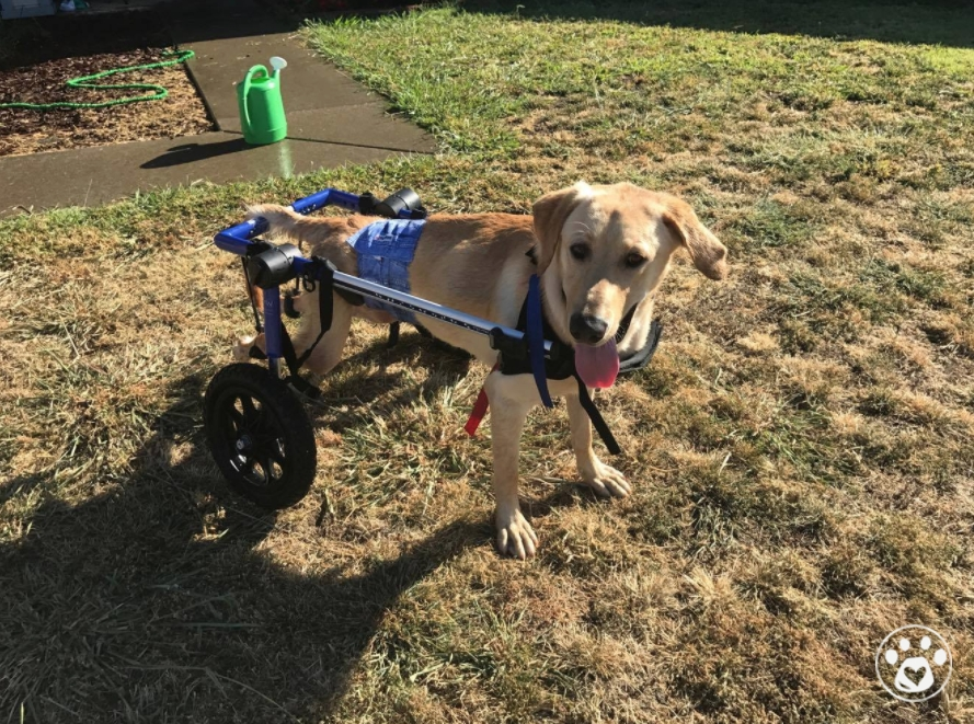 Help Tucker walk again