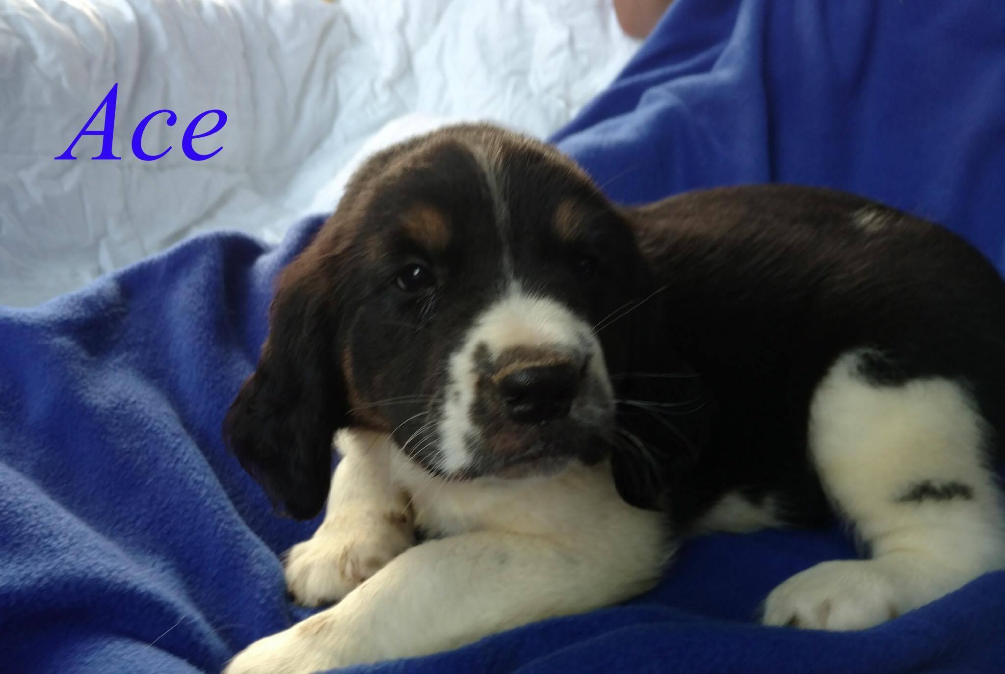 8 Parvo puppies URGENTLY need your help!