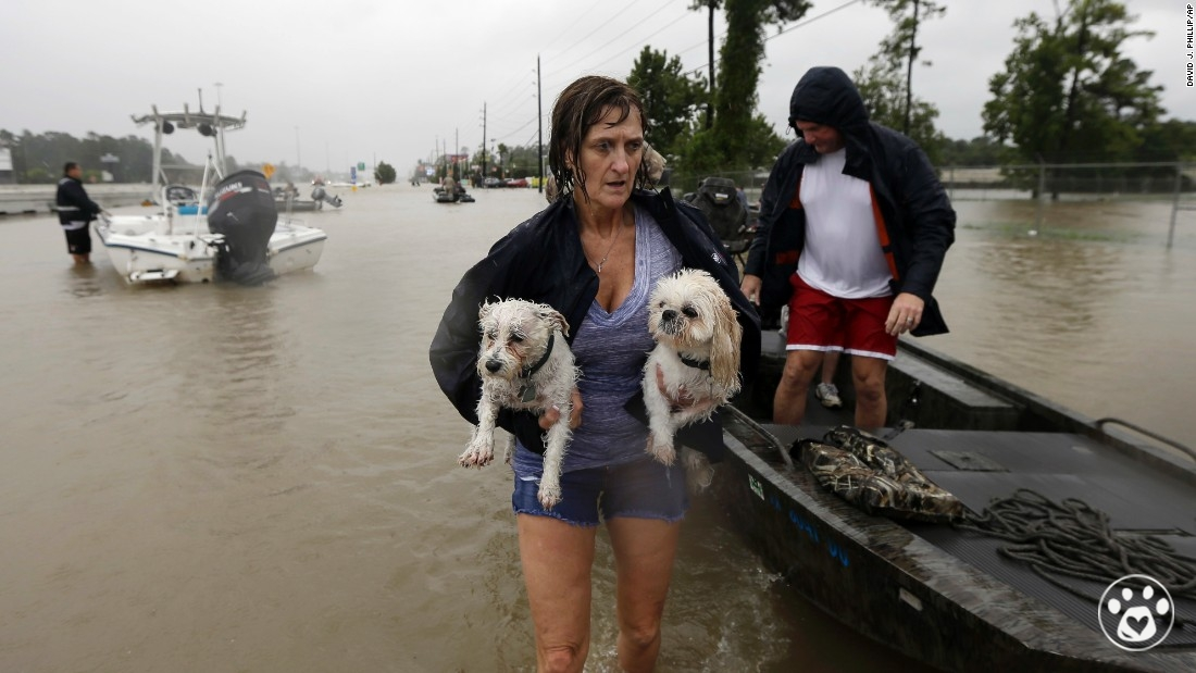 Help Animals Affected by Hurricane Harvey