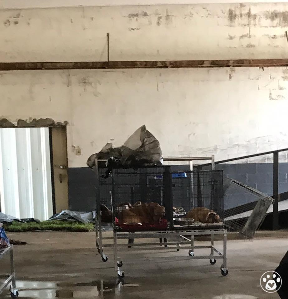 Sebring Angel's Hurricane Irma Fund