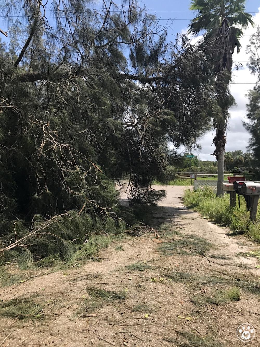 Hurricane Irma Emergency Fund