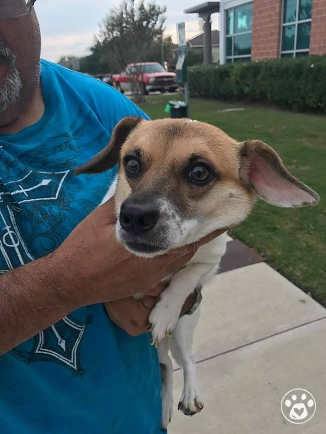 10 dogs saved from a Hoarder right before Harvey Hit