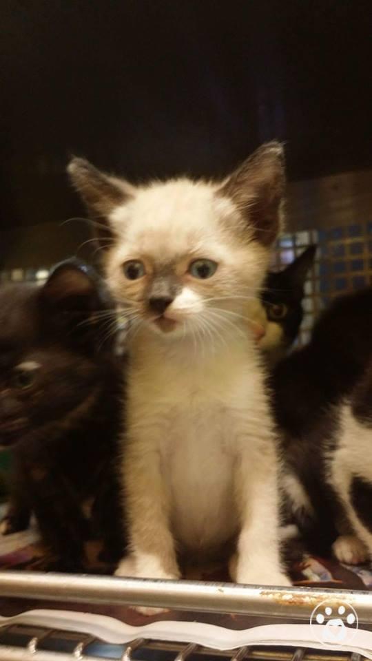 Too Many Sick Kitties