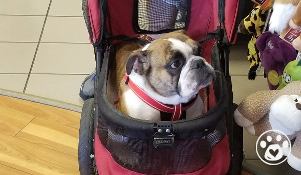 Mimi's Mission: To walk properly and pain free