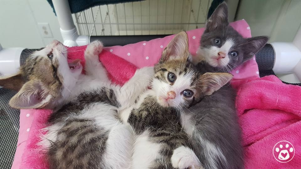 Kitties left in a BOX hoping to be saved!