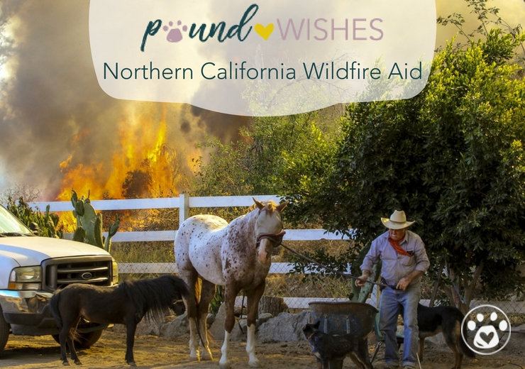 Northern California Wildfire Aid