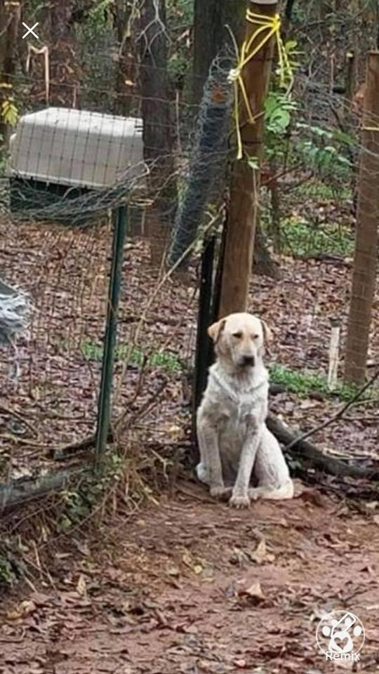 38 Dog Rescue