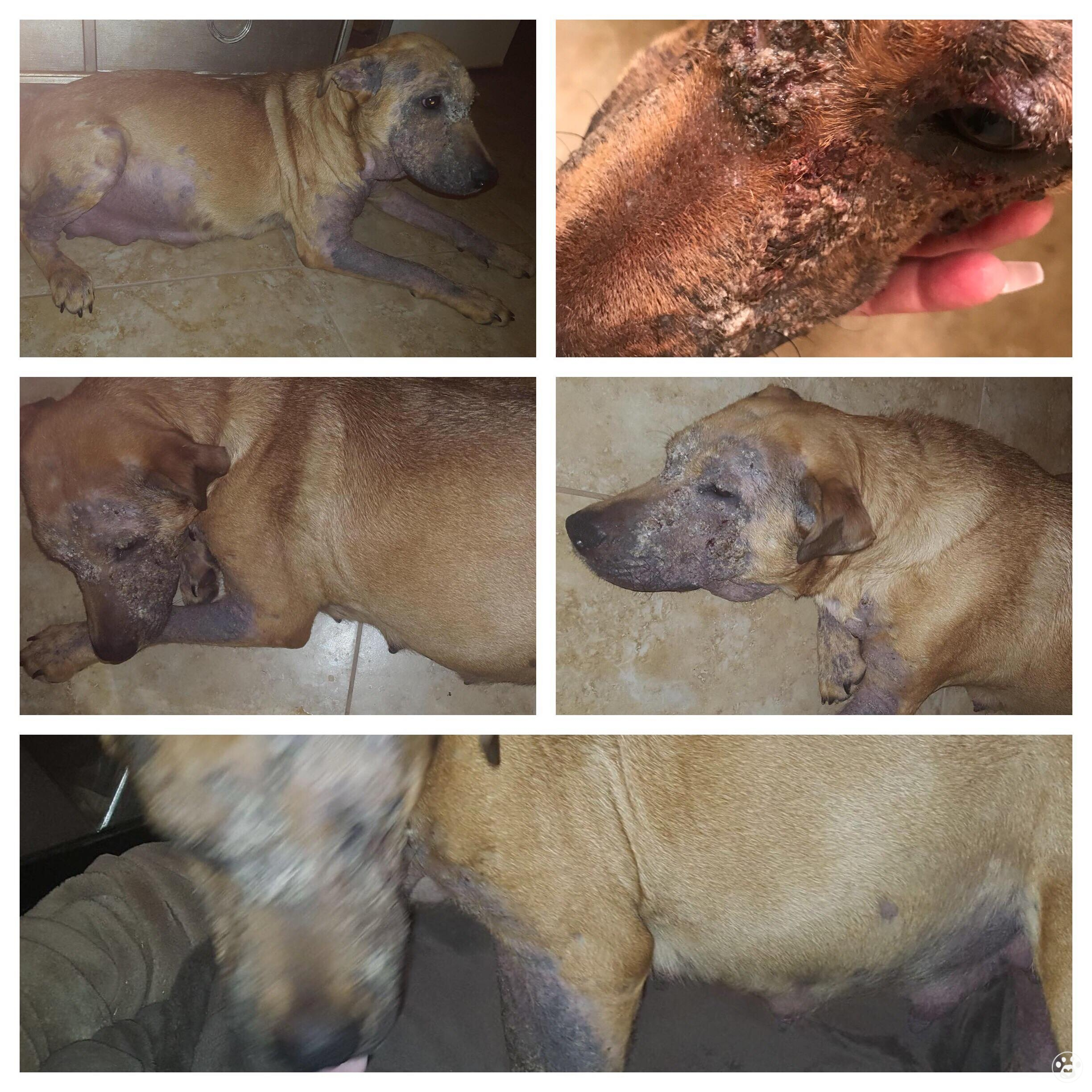 Pearl and her puppies need funds for ongoing care
