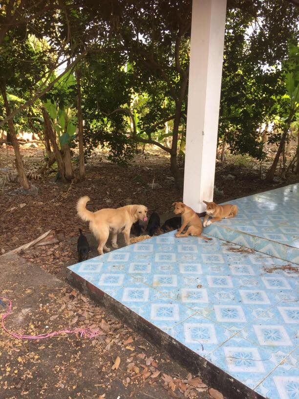 Poisoned Puppies