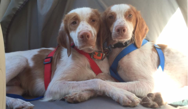 Chase and Ryder Profile Photo