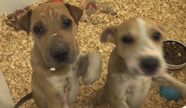 4 Puppies: Coco, Toffee, Rosebud, Smokey