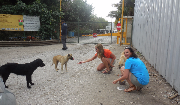 The Guanica Animal Rescue Project - Guanica, Puerto Rico