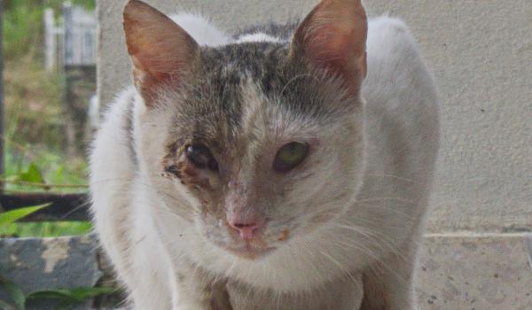 Puntas Street Cats TNR Project